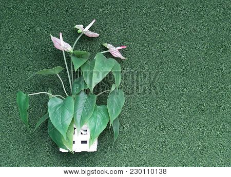 Artificial Ornamental Plants (pink Spadix Flower With Green Leaves) In Wooden Potted Hanging On Arti