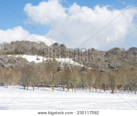 Snow Covered Woodland And Hillside With A Blue Sky