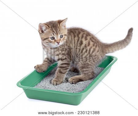 Cat sitting in green litter box isolated