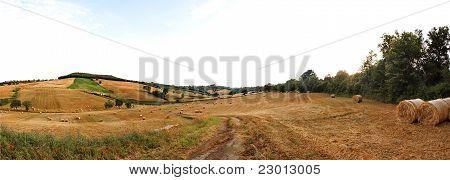 Rural panorama