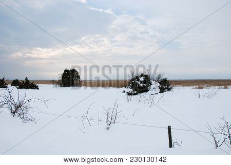 Snowy Landscape With A Fence And Junipers By Winter Season