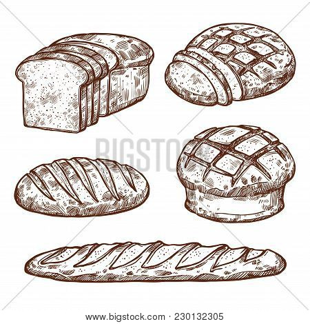 Bread Sketch Icons For Bakery Shop. Vector Isolated Set Of Wheat Bagel Or Rye Bun And Croissant, Bak