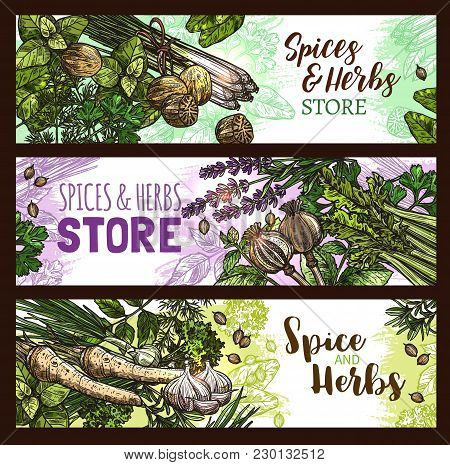 Herbs And Spices Sketch Banners For Farm Store. Vector Design Template Of Fresh Farm Grown Basil, Or