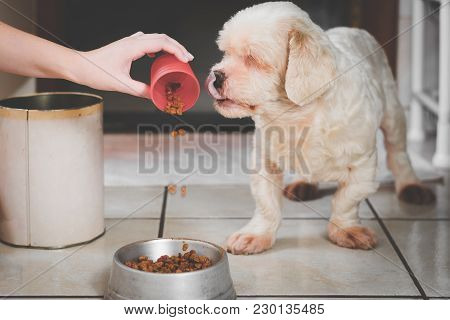 Pouring Ration On The Bowl For The Dog. Starving White Dog Looking At The Ration, Seems Delicious, D