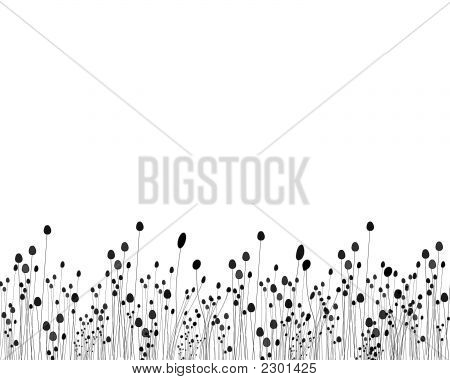 Black And White Posies And Flower Graphic Design