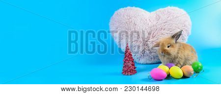Fluffy Brown Bunny Sit On Clean Blue Background With Pink Heart Pillow And Colorful Eggs, Little Rab