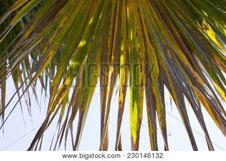 Palm Nature Natural Landscape Art Garden Botany