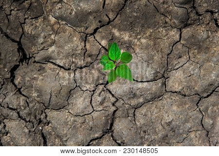 New Life In The Green World.  Green Plant Growing  In Arid Soil And Cracked Ground Or Dead Soil.  Ec
