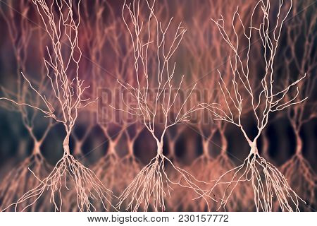 Human Hippocampus Neurons, Computer Reconstruction