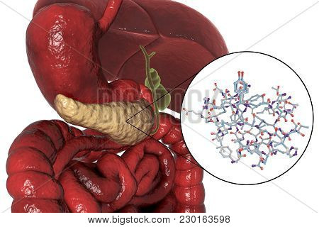 Human Pancreas And Close-up View Of Insulin Molecule, 3d Illustration