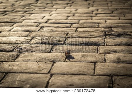 Stamped Concrete Pavement Outdoor, Cobblestones Pattern, Flooring Exterior, Decorative Appearance Te