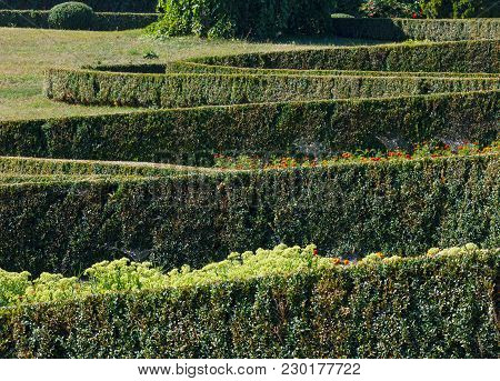 Summer Trimmed Evergreen Boxwood In Park Hillside. Composition From Plants On A Green Grass Lawn. So