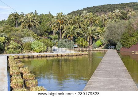 Barcelona,spain- March 15, 2015: Botanical Garden In Park Of Montjuic.