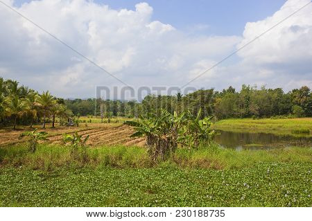 Sri Lanka Agricultural Landscape With Rice Crops Banana Trees And Water Hyacinth Near Woodland Under