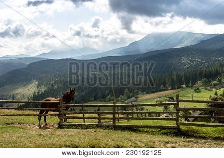 A Horse In The Background Of The Mountains. A Horse In Nature. A House Horse.