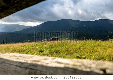 A Horse Is Grazing In The Field. A Horse Eats Grass. Journey Through The Mountains.