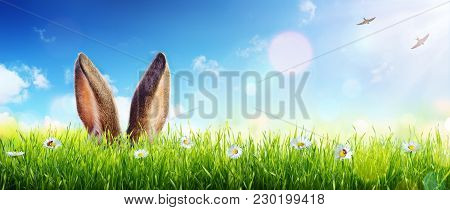 Ears Of Bunny Appear In Grass - Easter Card