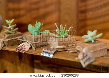 Succulent Wedding Gifts Or Favors At A Reception In California With Tags And Signs That Say Let Love