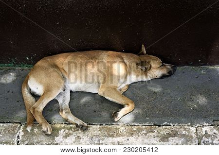 Sleeping Mutt Dog Abandoned Floor  Street   Animal