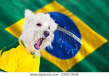 Brazilian west highland white terrier screaming with flag blurred zoom movement