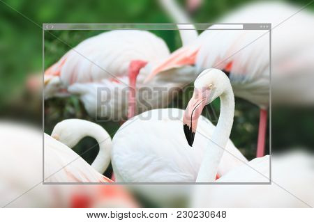 Web Site Page Design Concept, Flamingo Bird Standing In The Nature Background.