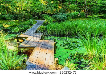 A Wooden Bridge Across A Pond With Duckweed And Leaves Of Water Lilies, In A Park With Subtropical P