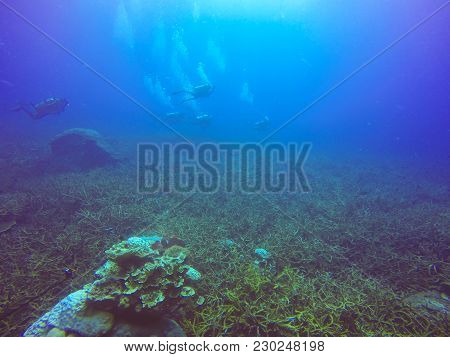 Scuba Divers Swimming Over The Live Coral Reef Full Of Fish And Sea Anemones.