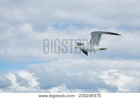 Seagull Flying In The Sky With Clouds