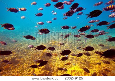Photo Of Tropical Fishes At Coral Reef Area