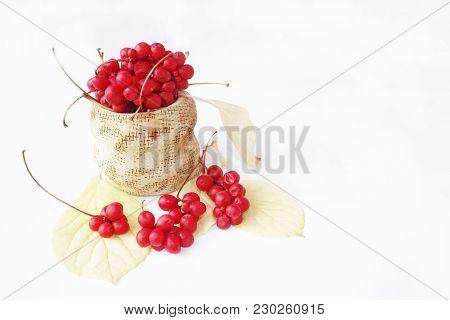 Schisandra Red In Ceramic Bag. Red Ripe Schizandra In Bucket. Five Flavor Berry. Fresh Red Ripe Berr
