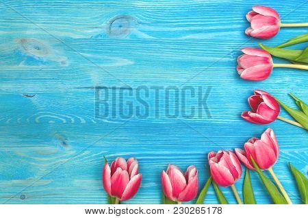 Tulip Flowers On Blue Wooden Table Board Background With Copy Space. Woman Day Concept. Mother Day B