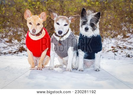 Cool Funny Freezing Icy Couple Of Dogs In A Row  In In The Snow With Pullover Or Sweater , Sitting A