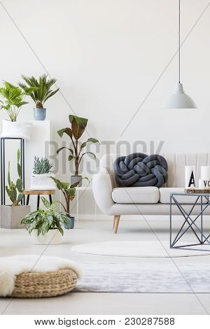 Plants In Living Room