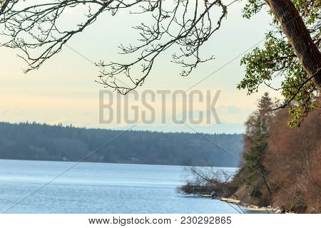Beautiful Rocky Sea Shore With Driftwood Trees Trunks At Sunrise Or Sunset.