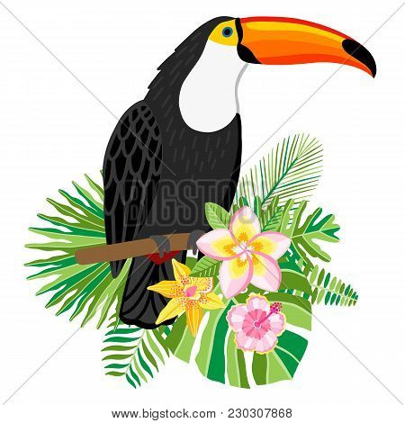 Toucan Vector Illustration. Exotic Tropical Bird Isolated