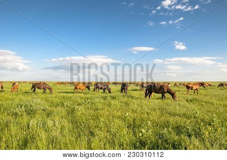 Herd Of Wild Horses With A Long Mane Running Galloping Over The Steppe Flowers On The Island