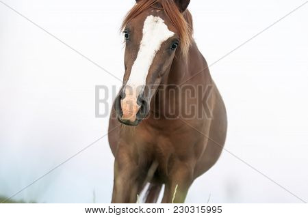 The Wild Horse, Equus Ferus, In The Steppe In The Early Morning Enlightened By Sunlight Rays. View O