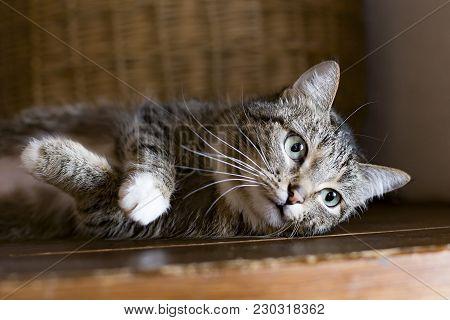 The Cat Lying On A Shelf, Resting