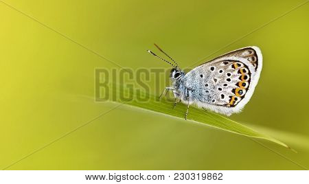 Beautiful Blue Butterfly On A Green Background With Copy Space - Spring, Summer Concept