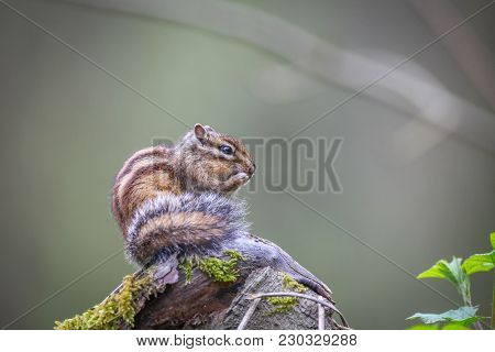 Chipmunk Sitting On A Rock And Eating