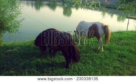 Amazing And Animal Animals Beautiful Brown Caveelry Color Farm Field For Grass Grassland Green Hayfi