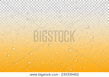 Beer Drops On Glass, Vector Water Drops On Glass. Rain Drops On Transparent Background.