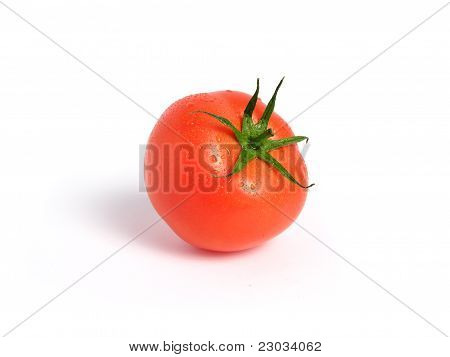 Wet tomato alone