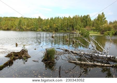 The Forest Landscape By The Lake In Siberia