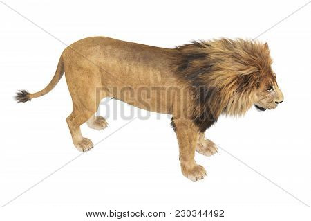 Lion Feline Young And Strong. 3d Rendering