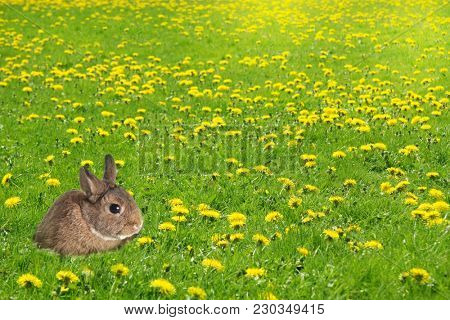 Little bunny rabbit in a grass field filled with dandelions. Easter or springtime concept.