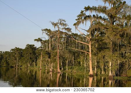 Spanish Moss Hangs Over A Louisiana Bayou On A Summers Day.