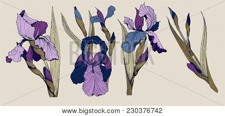 Iris Flowers Vector Clip Art Set Of Four Isolatet Botany Toile De Joy Images