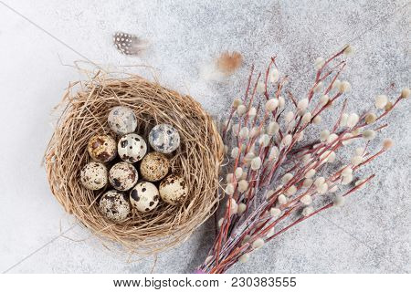 Quails eggs in nest and pussy willow. Easter greeting card. Top view
