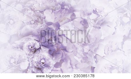 Floral  Purple-white Background.  Purple-white  Vintage  Flowers Peonies.  Floral Collage.  Flower C